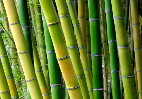 materassi-canne-di-bamboo