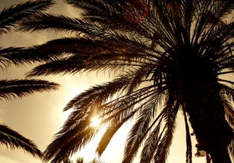 materassi-foglie-di-palma